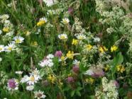 Letničky pro včely - 10 g